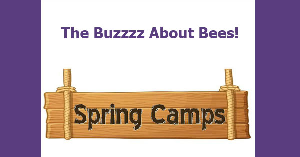 The Buzzzz About Bees!